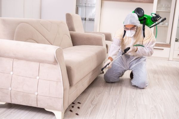 Pest control contractor is working on cleaning and controlling the pest for householders